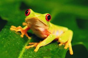 Zdjęcie Biologia