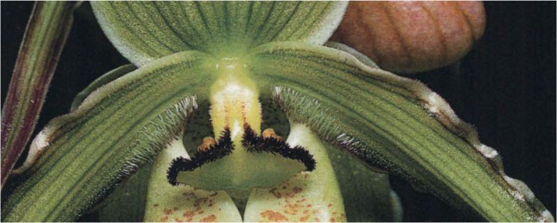 Storczykowate Kolumbii