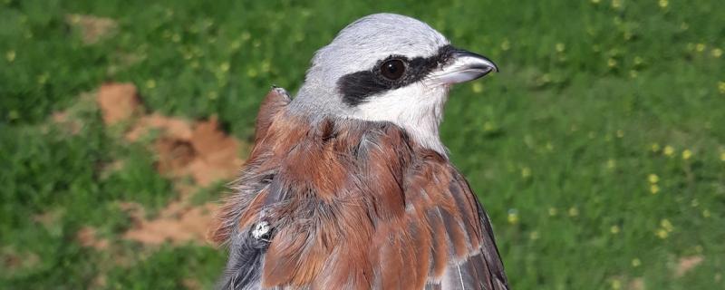 Ekspedycja Stacji Badania Wędrówek Ptaków