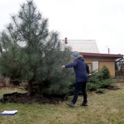 Przesadzanie drzew