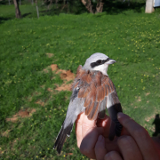 Ekspedycja Stacji Badania Wędrówek Ptaków Wydziału Biologii