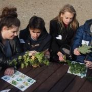"""Uczniowie III&#160;LO w&#160;Sopocie na warsztatach """"Rozpoznawanie drzew i&#160;krzewów"""" <br /> fot. Katarzyna Dardzyńska-Lis"""