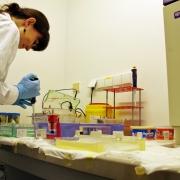 W Katedrze Ewolucji Molekularnej badamy DNA pasożytów pstrąga tęczowego... <br /> (fot. Piotr Rutkowski)