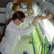 W laboratoriach Katedry Fizjologii i Biotechnologii Roślin obserwujemy reakcję wzrostową glonów m.in. na metale ciężkie. <br />(