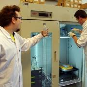 W Katedrze Genetyki Molekularnej Bakterii badamy m.in. kinetykę replikacji DNA. <br /> (fot. Piotr Rutkowski)