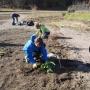 """Zakładanie kolekcji """"Dziko rosnące rośliny jadalne wykorzystywane dawniej i obecnie"""""""
